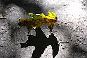 Fallen Leaf Photos - Balance by Susanne Van Hulst