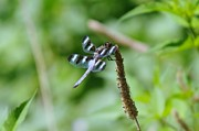 Dragonflies Photos - Balancing  by Jeff  Swan