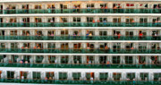 Boat Cruise Photo Prints - Balcony People Print by Perry Webster