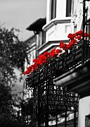 Rose Red City Framed Prints - Balcony Roses Framed Print by Edward Myers
