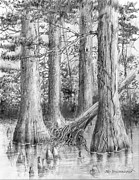 Cypress Tree Drawings - Bald Cypress Enhanced by Jim Hubbard