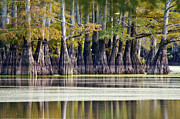 Jeka World Photography Posters - Bald Cypress Reflections Poster by Jeka World Photography