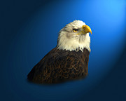 Wildlife Digital Art Posters - Bald Eagle - BLYTH - In Captivity Poster by J Larry Walker