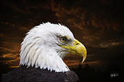 Featured Glass Framed Prints - Bald Eagle - Freedom and Hope - Artist Cris Hayes Framed Print by Cris Hayes