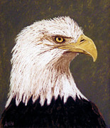 Profile Pastels Metal Prints - Bald Eagle 1 Metal Print by Jan Amiss