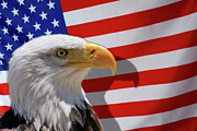 Authority Photos - Bald eagle and US flag by Sami Sarkis