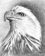 Head Drawings Prints - Bald Eagle Print by Arline Wagner