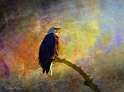 Masked Digital Art Prints - Bald Eagle Awaiting Sunrise Print by J Larry Walker