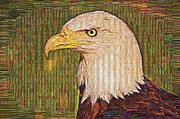 Sewn Framed Prints - Bald Eagle Embroidered Framed Print by Chris Thaxter