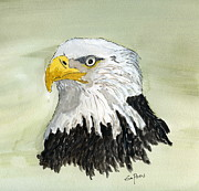 Wild Life Drawings Framed Prints - Bald Eagle Framed Print by Eva Ason