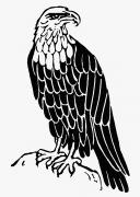 Eagle Drawing Posters - Bald Eagle Poster by Granger