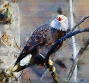 Eagle Paintings - Bald Eagle in a Tree by Clarence Alford