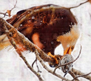 Eagle Paintings - Bald Eagle in a Tree Eating a Fish by Clarence Alford