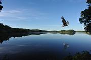 Dan Friend - Bald eagle in canada flying