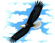 Kalen Malueg Drawings Posters - Bald Eagle in flight Poster by Kalen Malueg