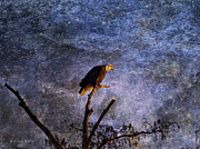 Layered Digital Art Prints - Bald Eagle In Suspense Print by J Larry Walker