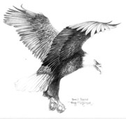 Eagle Drawing Drawings Originals - Bald Eagle Landing by Bob Patterson