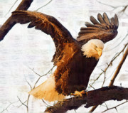 Eagle Paintings - Bald Eagle Landing on  a Tree Branch by Clarence Alford