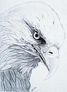 Falcon Drawings Metal Prints - Bald Eagle Metal Print by Nancy Rucker