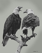 Landmarks Originals - Bald Eagle Pair 4 by Larry Linton