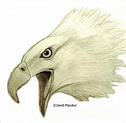 Janet Marston - Bald Eagle Pencil Drawing