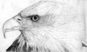 Drawing Of Eagle Drawings - Bald Eagle Profile by Lucien Van Oosten