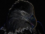 Scratch Digital Art Originals - Bald Eagle Scratch Board Art Print by Anthony Allen