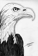 Shashi Kumar - Bald Eagle