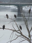 Jerry Browning Prints - Bald Eagles in the City Print by Jerry Browning