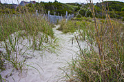 Beachscape Posters - Bald Head Walkway Poster by Betsy A Cutler East Coast Barrier Islands