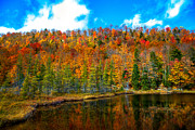 Fir Trees Photos - Bald Mountain Pond IV by David Patterson