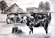 Black Angus Drawings Prints - Baldy Memories Print by Carolyn Valcourt
