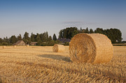 Bale Metal Prints - Bale of Hay in Field Metal Print by Jaak Nilson