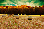Tree Lines Digital Art Posters - Bales of Autumn Poster by Bill Tiepelman