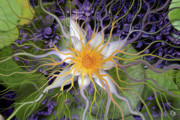 Contemporary Flower Art Prints - Bali Dream Flower Print by Christopher Beikmann