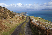 Dirt Road Posters - Ballinskelligs Bay Near Ballinskelligs Poster by Design Pics / Peter Zoeller