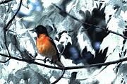 Digital Paint. Framed Prints - Baltimore Orioles Dream Framed Print by Nancy TeWinkel Lauren