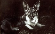 Corgi Drawings - Balyn in the Grass by C nick Tuigsinn
