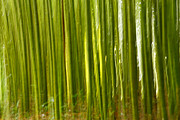 Abstract Movement Photos - Bamboo abstract by Gaspar Avila