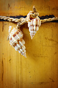 Rope Photos - Bamboo And Conches by Carlos Caetano