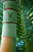 Kathy Yates - Bamboo And Fern