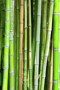 Japanese Prints - Bamboo Background Print by Carlos Caetano
