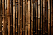 Bamboo Fence Prints - Bamboo Dark Background Print by Brandon Bourdages
