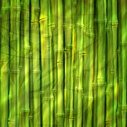 Bamboo Posters - Bamboo Dream Poster by Ann Croon