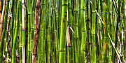 Bamboo Forest Framed Prints - Bamboo Framed Print by Dustin K Ryan