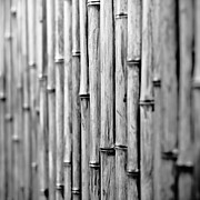 Bamboo Fence Prints - Bamboo Fence Print by George Imrie Photography