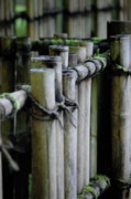 Bamboo Fence Art - Bamboo fence by Samantha Kimble