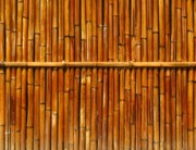 Pole Prints - Bamboo Fence Print by Yali Shi
