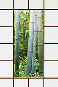 Bamboo House Photo Prints - Bamboo Forest Through a Rice Paper Window Print by Jeremy Woodhouse