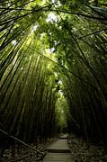 Bamboo Forest Framed Prints - Bamboo Forest Framed Print by Tom Cuccio